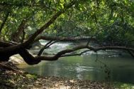 Ernakulam (Cochin,Kochi) Wayanad Cheap Tour Package 2 Nights-3 Days
