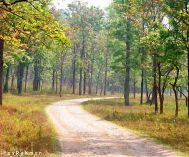 Chennai to Wayanad Old Age Tour Package 2 Nights-3 Days
