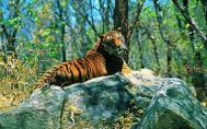Chennai to Wayanad Wildlife Tour Package 2 Nights-3 Days