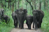 Mysore to Wayanad Wildlife Tour Package 2 Nights-3 Days