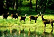 Kalpetta to Wayanad Wildlife Tour Package 2 Nights-3 Days