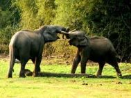 Bangalore to Wayanad Weekend Tour Package 1 Night- 2 Days