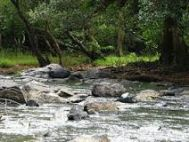 Cochin (Kochi, Ernakulam) Wayanad Honeymoon Tour Package 2 Nights- 3 Days